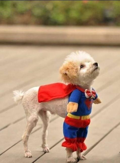 superhero dogs