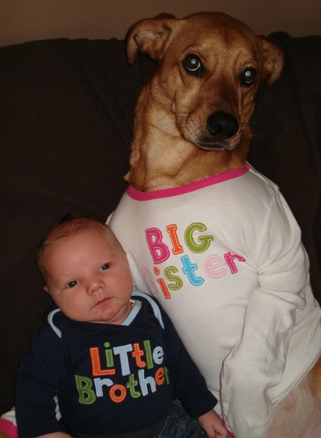 dogs and babies proud big sister
