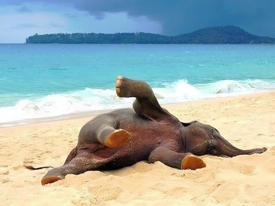baby elephant on beach