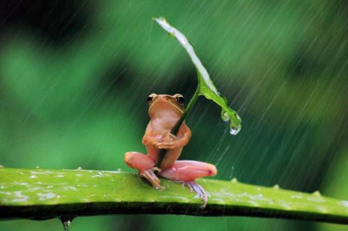 frog in the rain umbrella