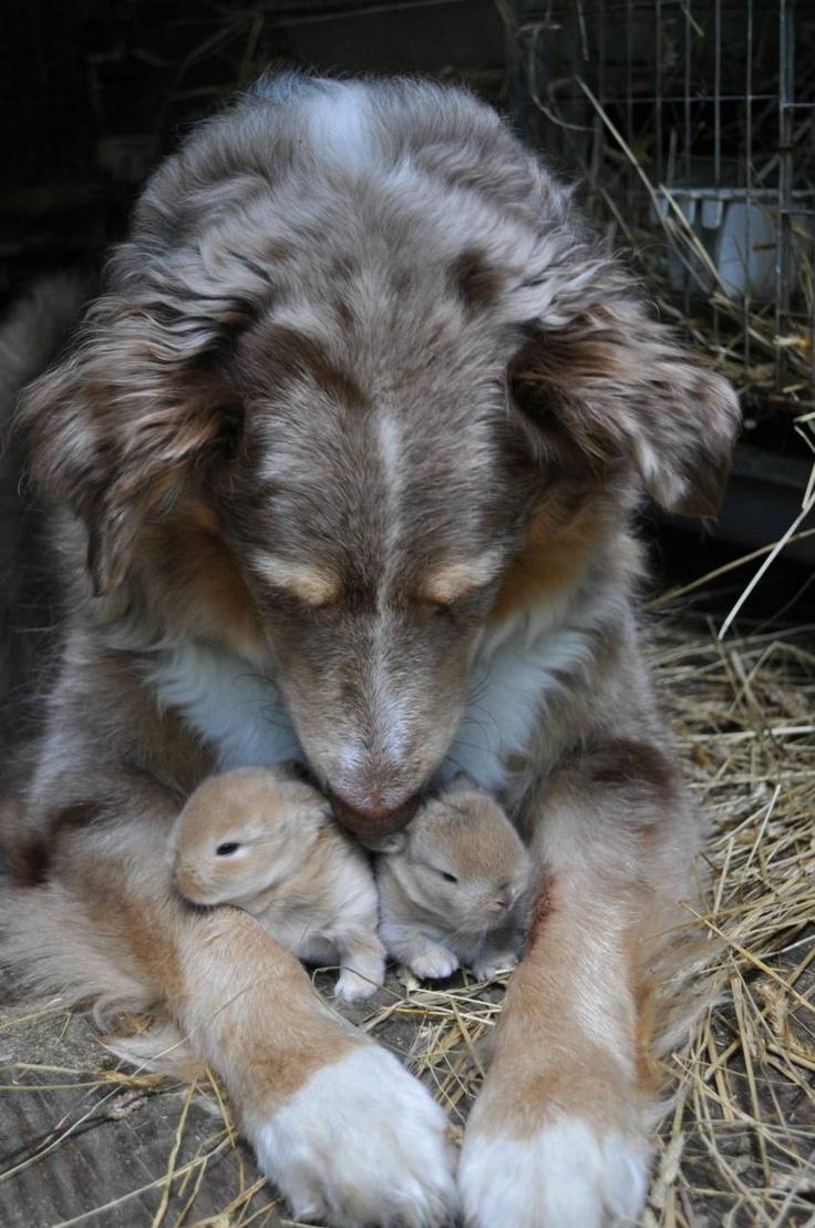 dog with bunnies