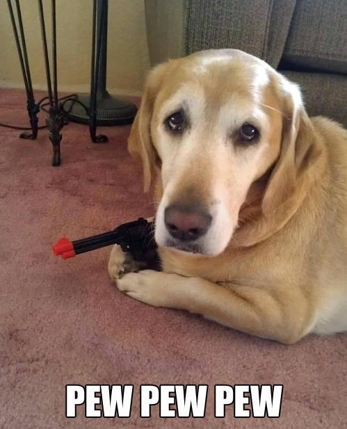 Funny Dog Picture