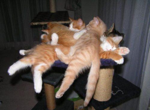 cat pile up