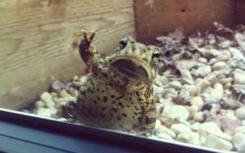 frog peace sign