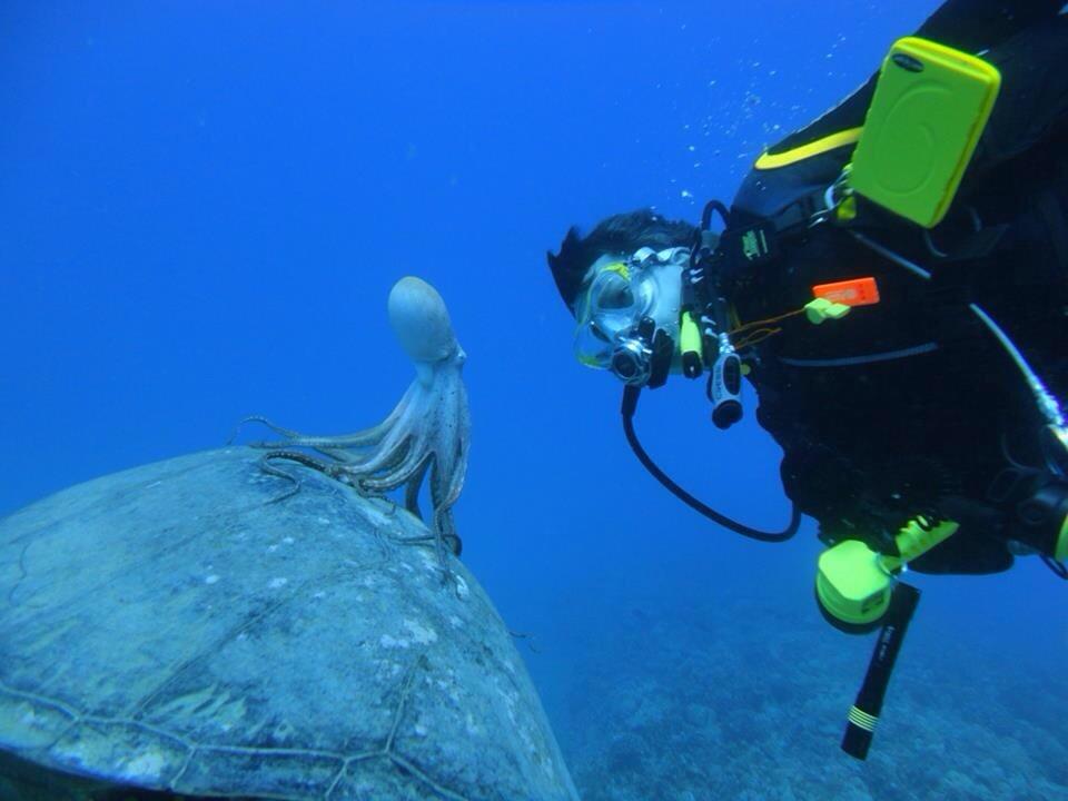 octopus riding sea turtle