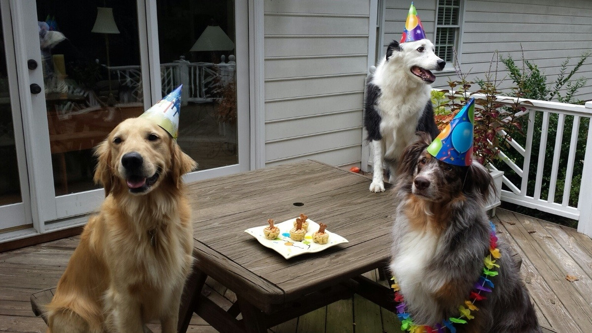Dogs Birthday Party