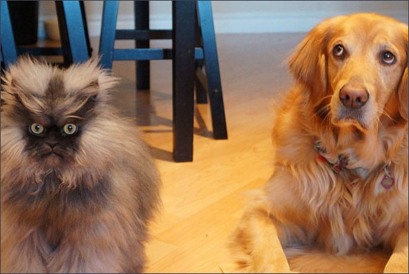 colonel meow with dog