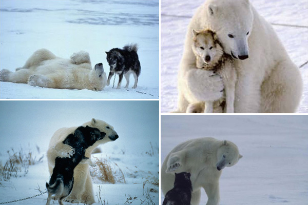 polar bear dog best friends