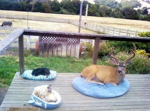 deer in dog bed