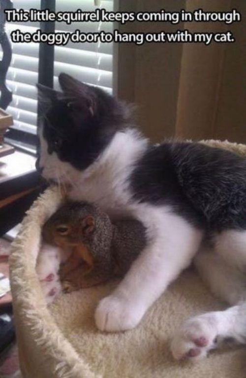 squirrel and cat