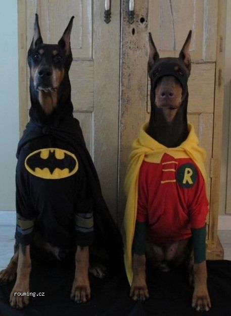 batman robin dogs