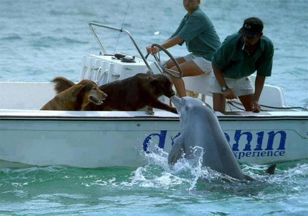 dolphins dogs