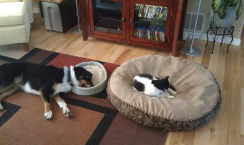 Cat In The Dog Bed And Dog In The Cat Bed