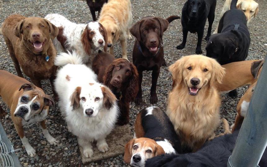 dogs want treats