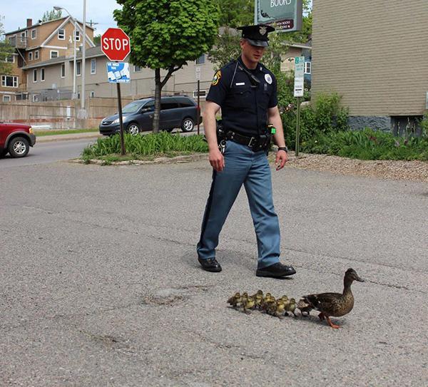 Police escort ducks