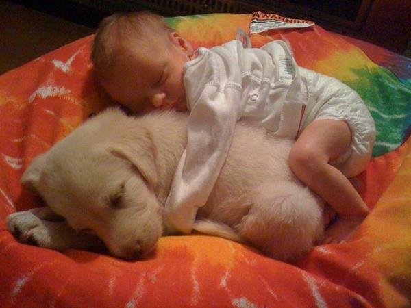 baby sleeping with dog cuddling