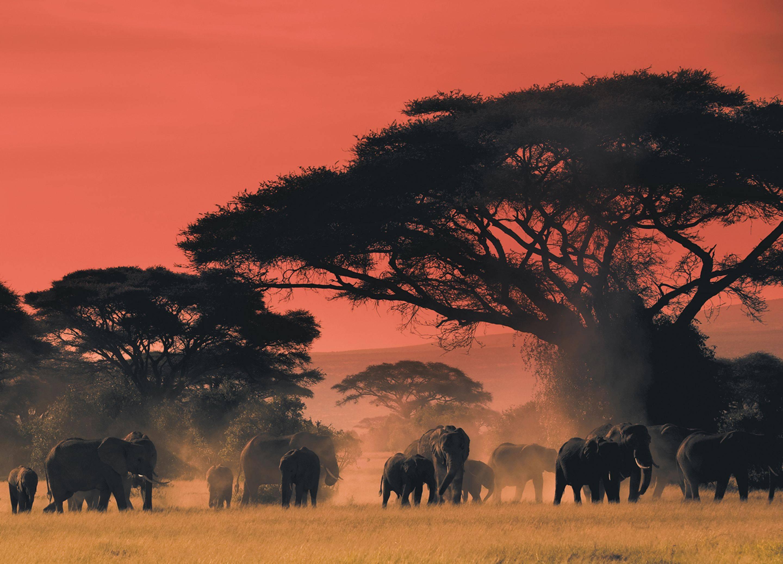 africa plains elephants