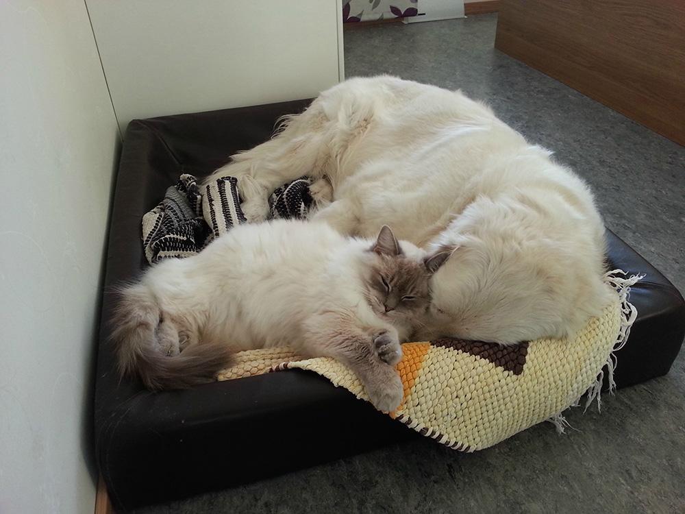 cat dog cuddling