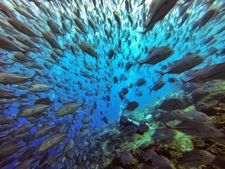 amazing fish photo