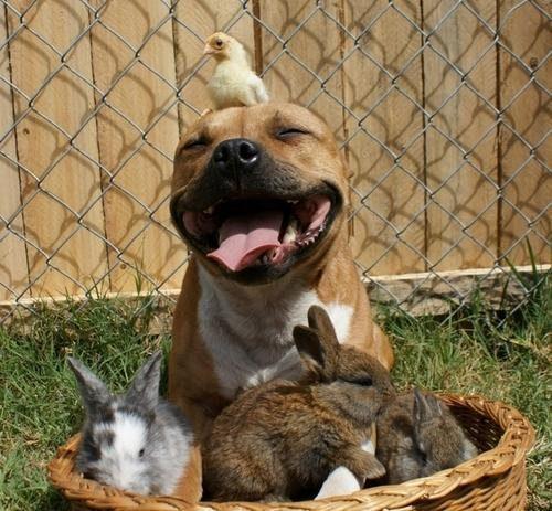 happy dog and rabbits animals