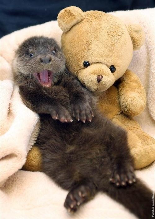cute otter photo