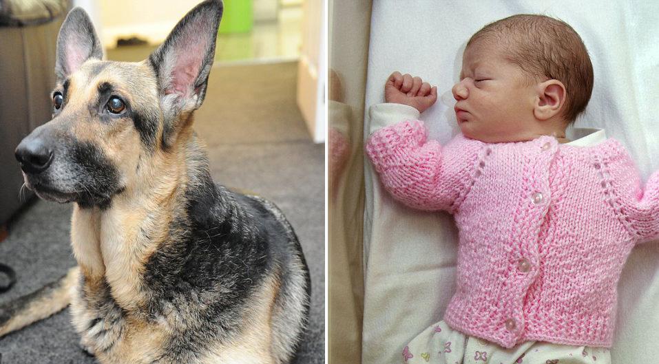 dog finds abandoned baby