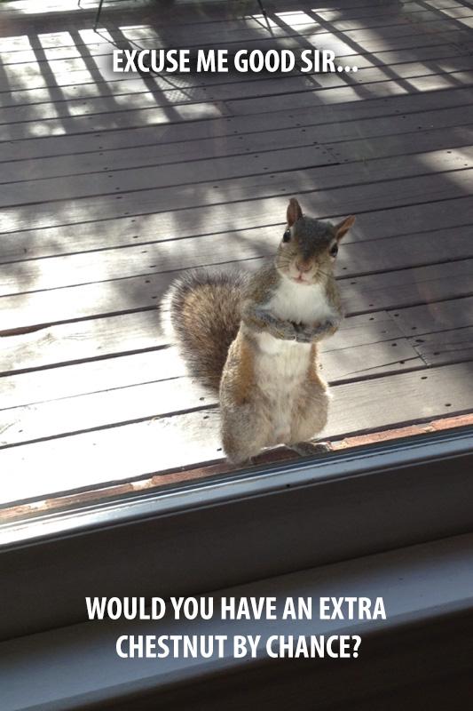squirrel waiting for peanut