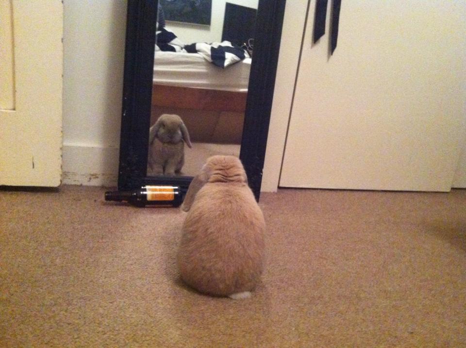 rabbit looking in mirror