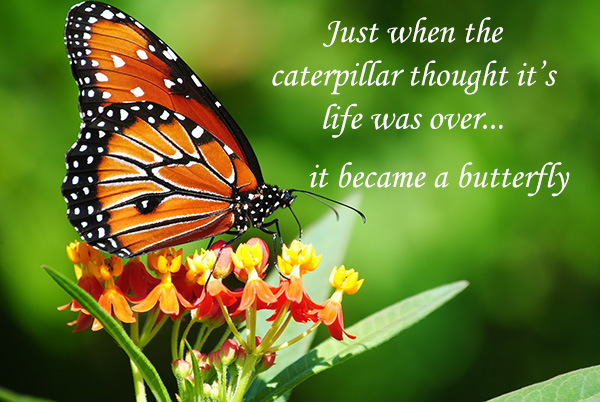 caterpillar becomes butterfly