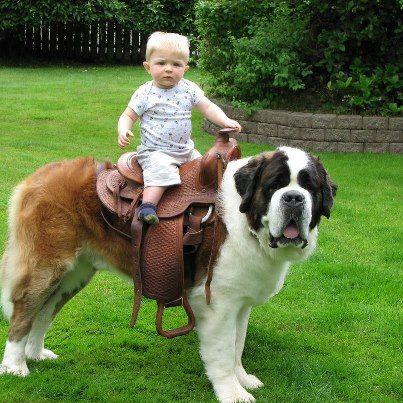 baby riding big dog