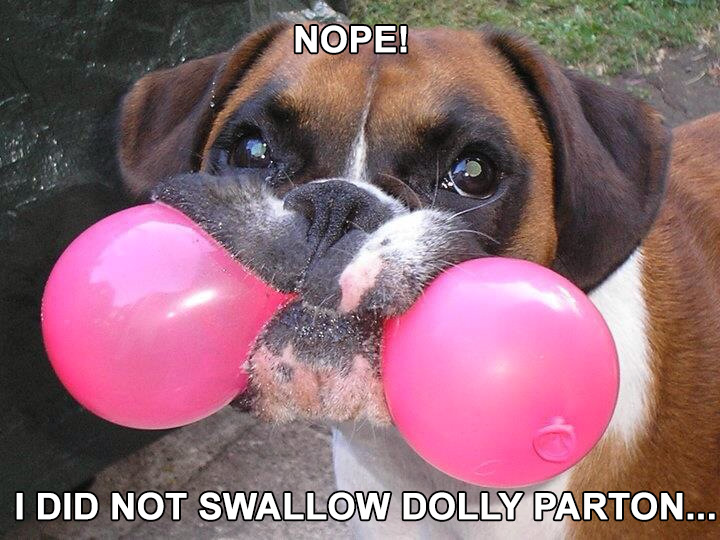 dog balloon in mouth