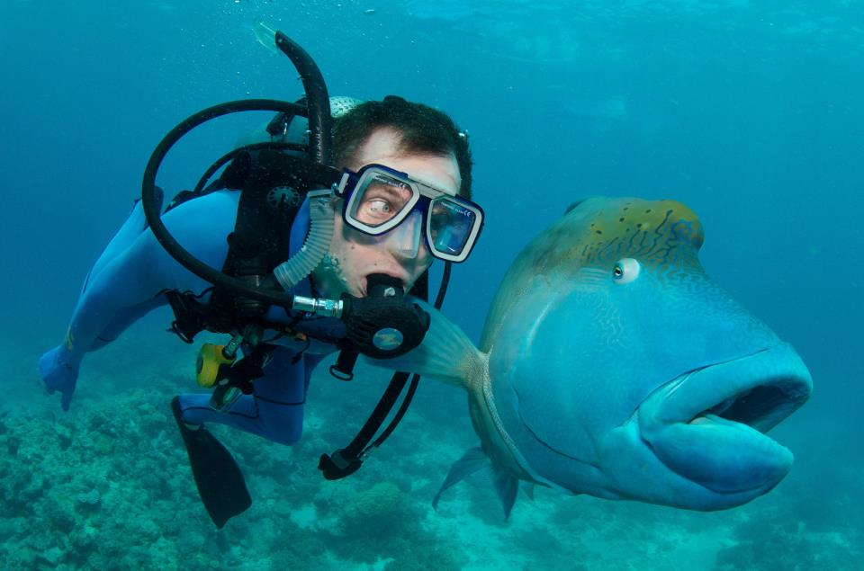 funny fish looking at diver