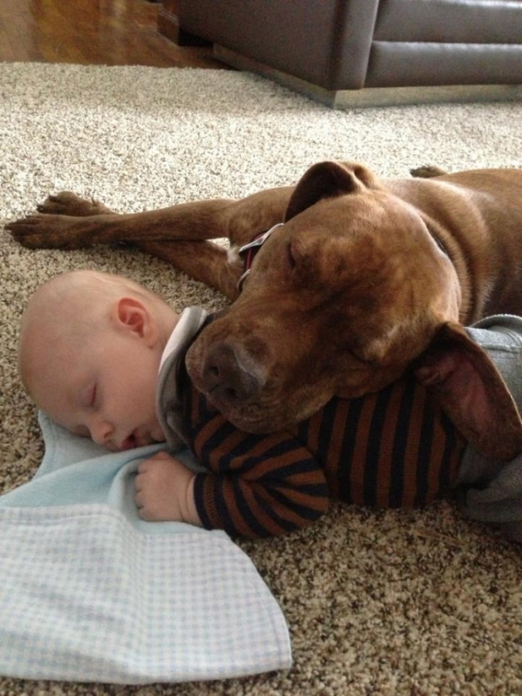 dogs sleeping with babies