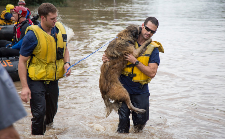 austin texas firefighters save dog