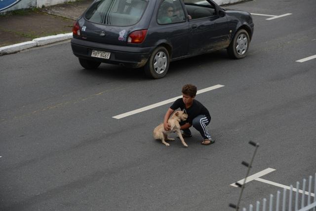 boy saves dog hit by car