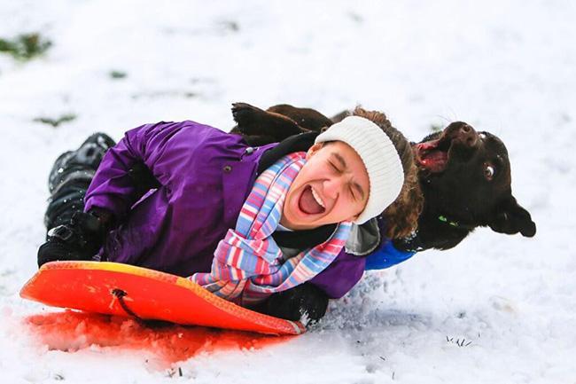 dog sledding funny face