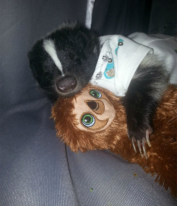 skunk hugging sloth