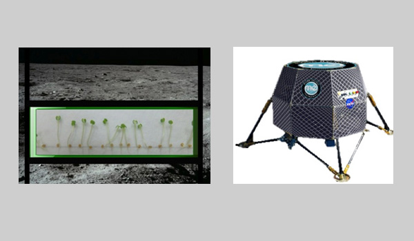 nasa plants on moon