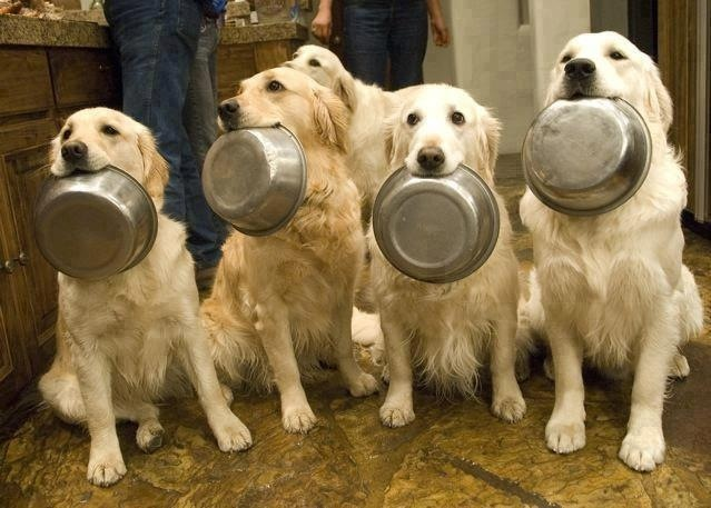 dogs food bowls in mouth
