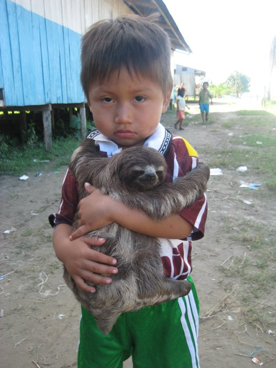 sloth hugging child