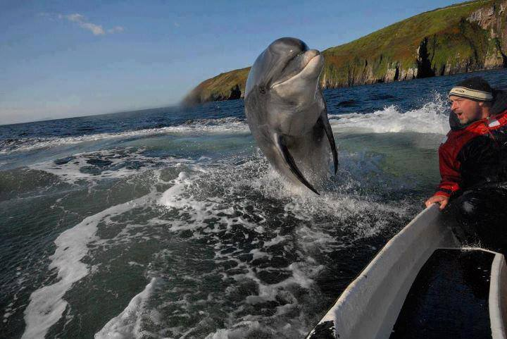 dolphin jumps by boat