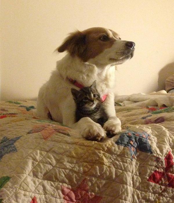 dog holding cat