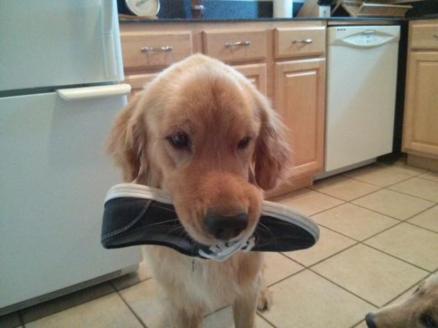 bran the dog saved