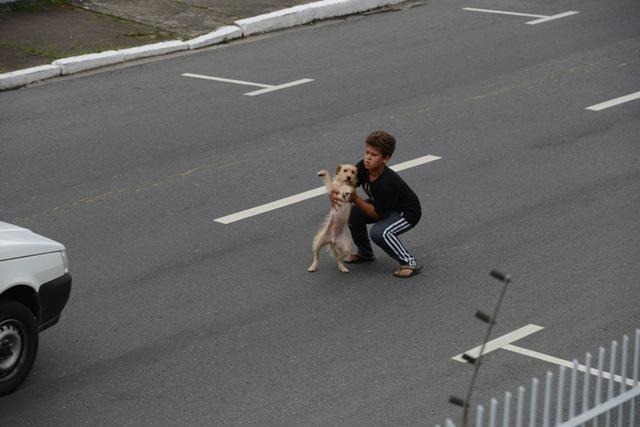 boy hero saves dog