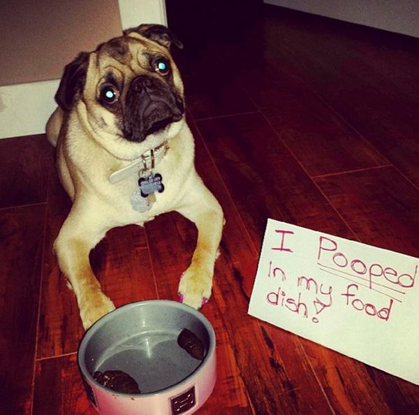 naughtiest dogs shaming