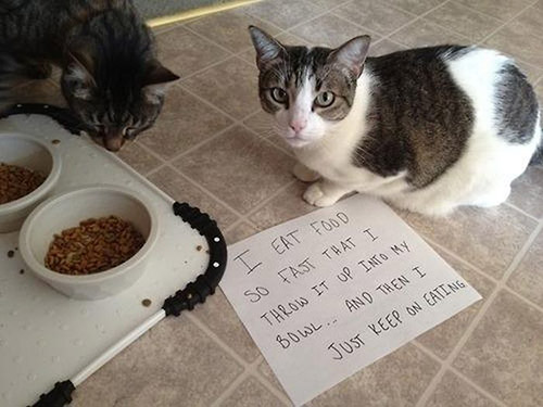 Best Cat Food For Throwing Up