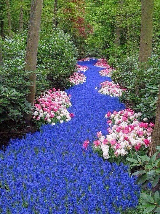 river of flowers netherlands