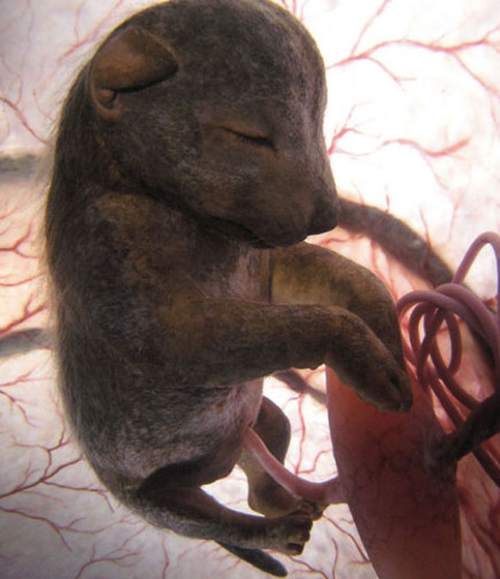 animals in womb