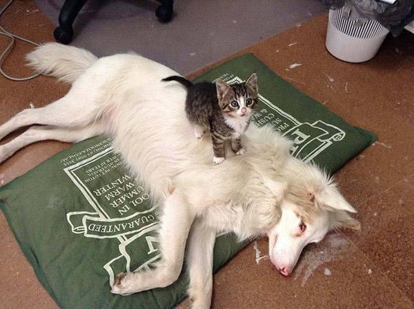 kitten sitting on top of dog