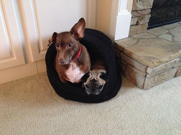 dogs in the cat bed